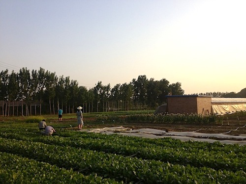 Shared Harvest Farm, the idyllic site of your agricultual education.