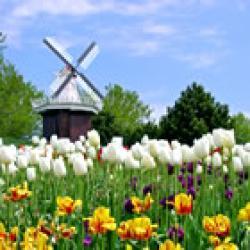 荷兰人's picture