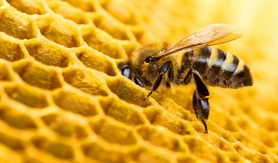 Beijing Park Bee Sting Fatality Prompts Family to Sue City 2M