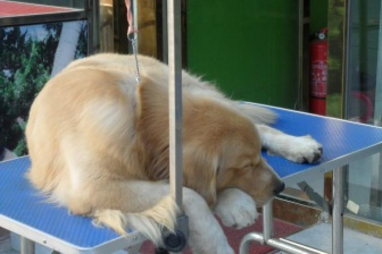 Ruff Housing: The Plight of Pups in Beijing Markets