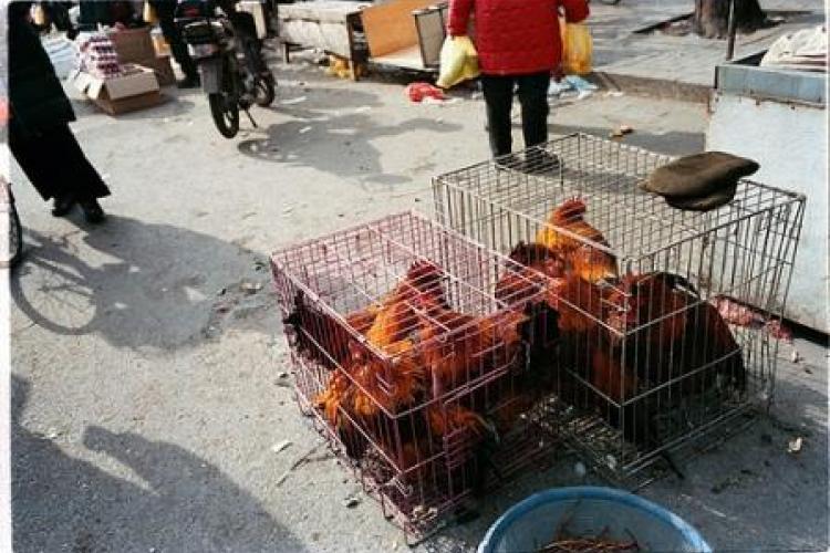 Avian Flu: Beijing Hospitals Take Precautions
