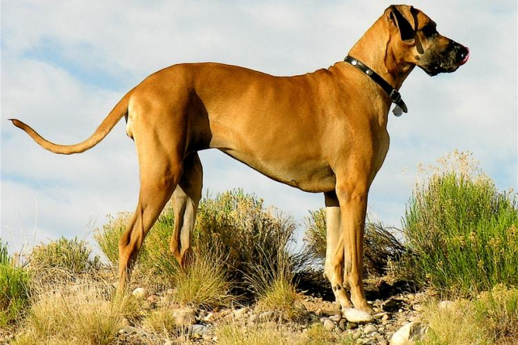 Large Dogs: Why the Fear?