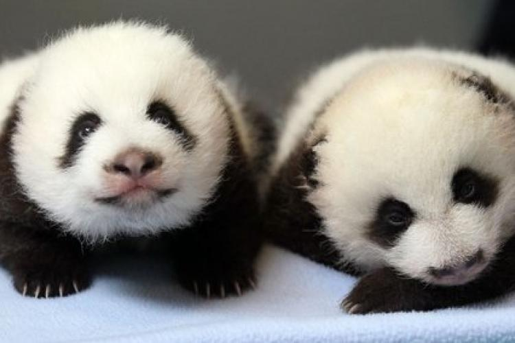 Talking Travel: Panda Deals in Atlanta, Toll Roads, and a 7,000-Person Tour Group