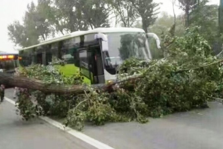 Killer Winds Cause Havoc Throughout Beijing