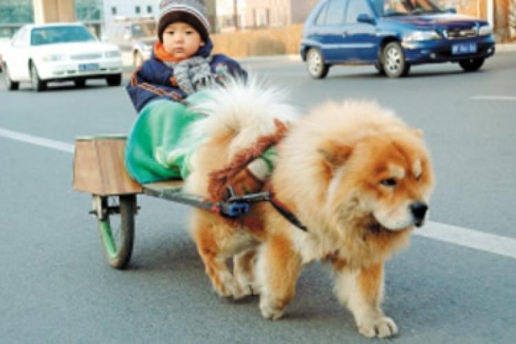 Community Matters: Pet Adoption Day
