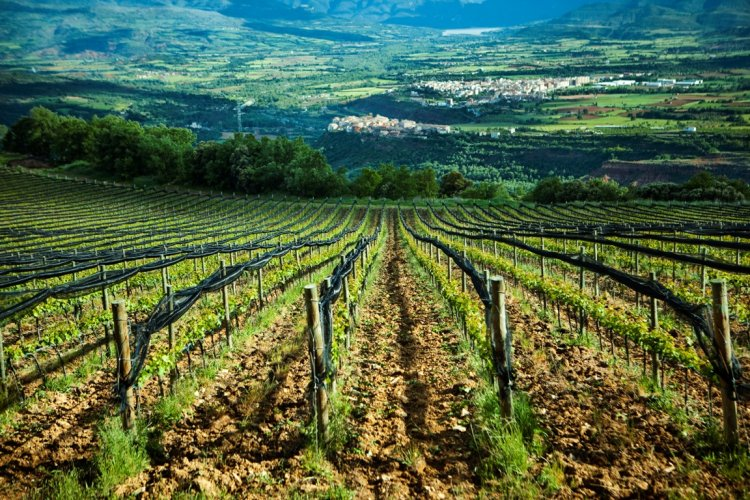 Pop-Up Wine Shop at Mosto Selling Spanish Wines at Wholesale Prices, April 3-7
