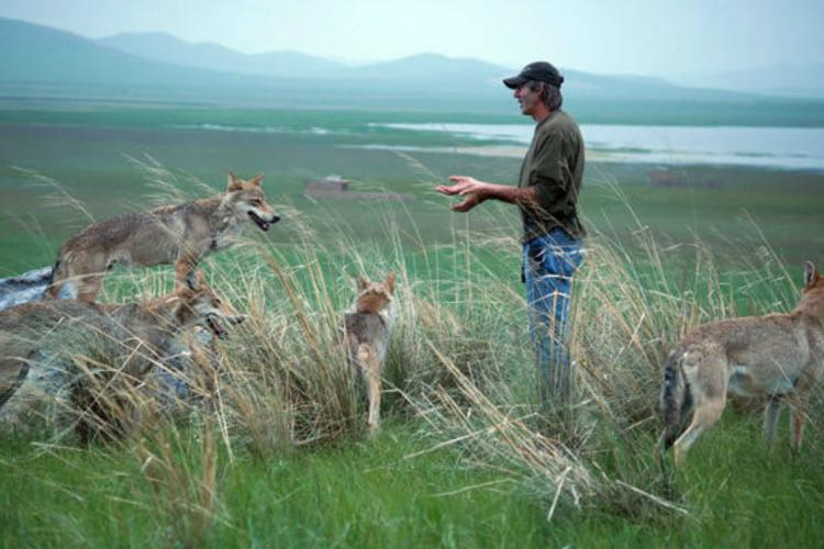 Wolf Totem Misrepresents Mongolian Culture
