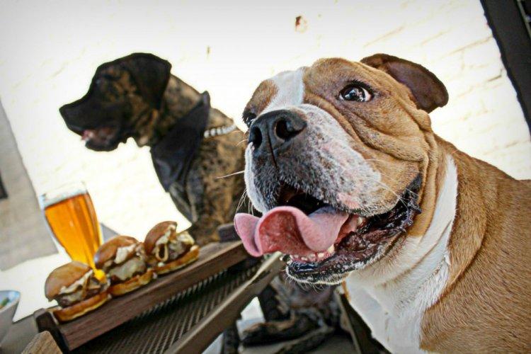 R1 Beijing's Best Dog-Friendly Patios