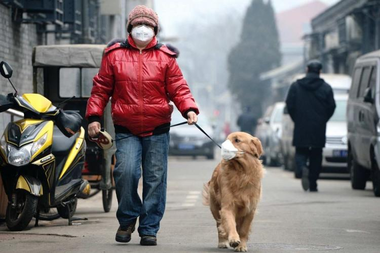 Pets and Pollution: What Can You Do to Protect Your Fluffy Babies From the Terrible Air?