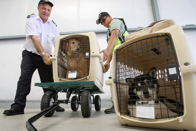 Animals Embarking: Making the Move With Your Beloved Pets