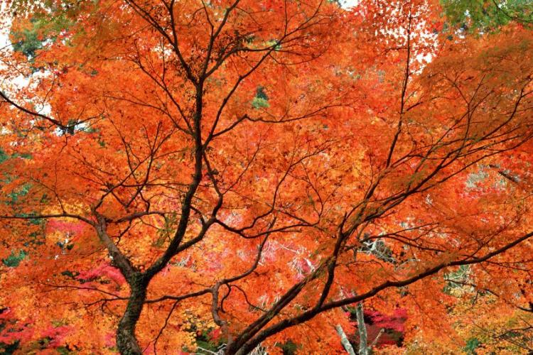 True Colors: Where to See the Best of Beijing's Fall Foliage