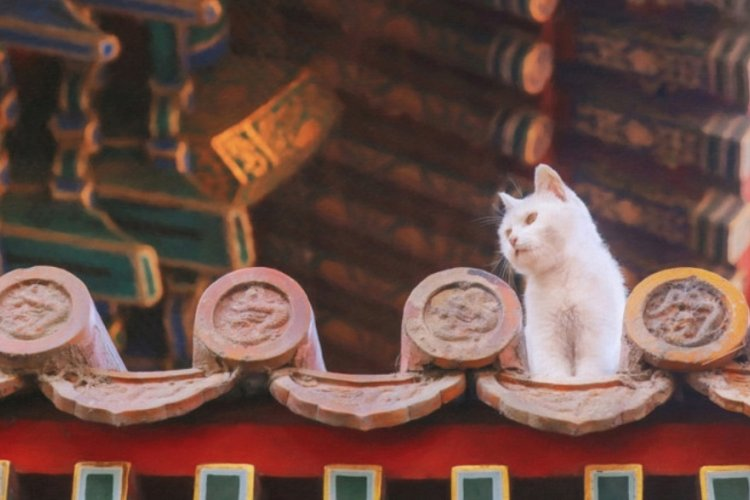 History Unleashed: How Beijing's Pets Have Endeared Everyone From Emperors to Millennials