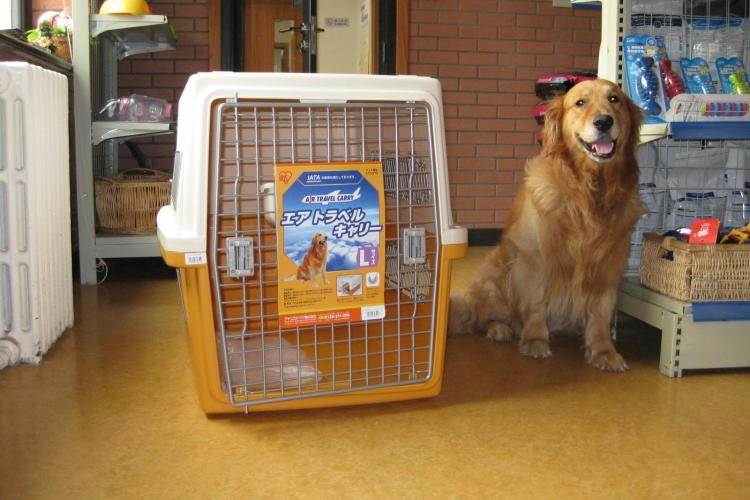 Departing From China with Pets: Step-by-Step Guide for Pet Owners
