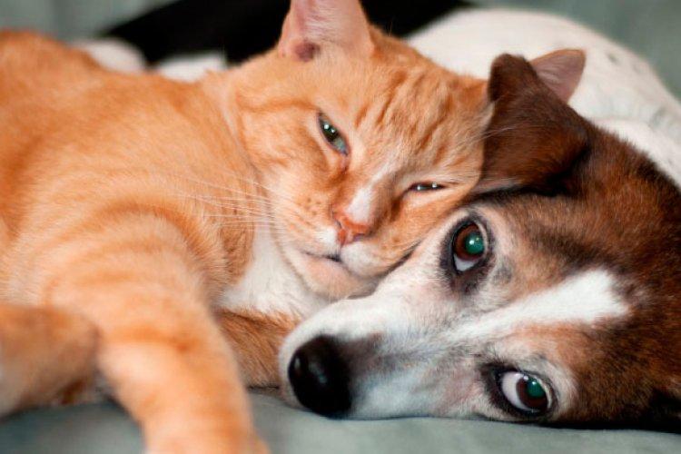 China Mulls Scrapping Quarantine Period for Pets