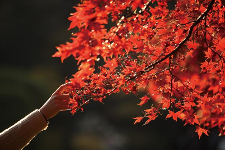 Eight Places to See Some of Beijing's Autumn Colors