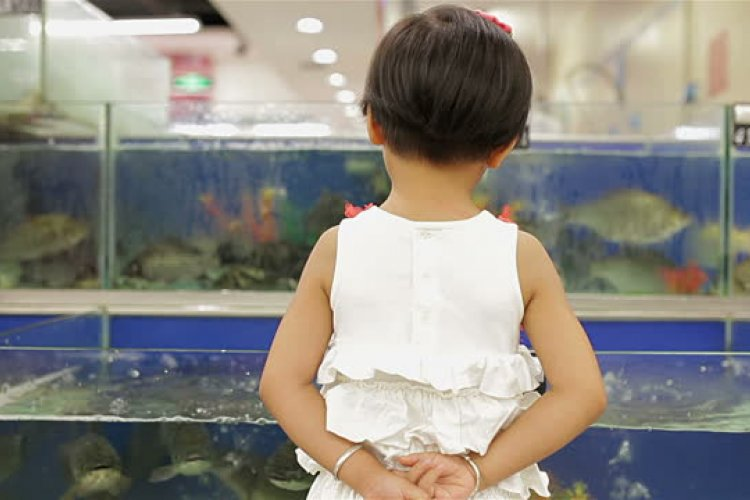 Clusterf*sh: Panic Ensues After Freshwater Fish Pulled from Live Tanks at Beijing Markets