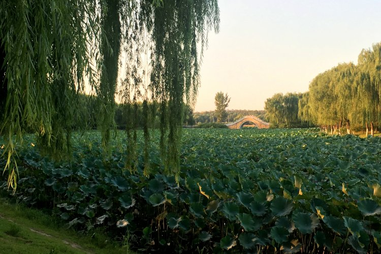 A Weekend Away at Tongzhou Grand Canal: Biking, Boating, and More