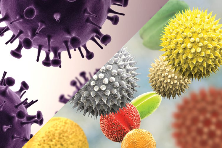 DP Can Allergies Affect Your Bodies Response to the Coronavirus?