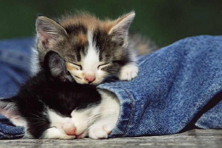 Fluffy Furs: Pet the Heartbreaking Kitties at 6 Cat-Themed Beijing Cafés