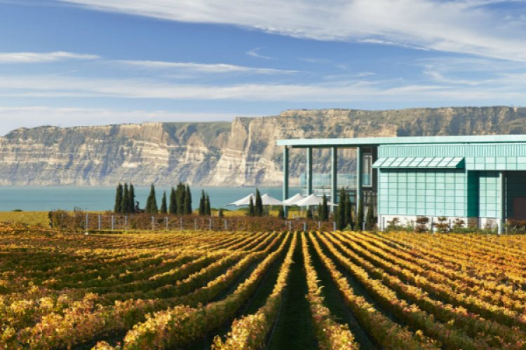 R Wine Updates: Cheers Sixth Anniversary Party, Free Kiwi Wine Tasting, and Riesling Tasting