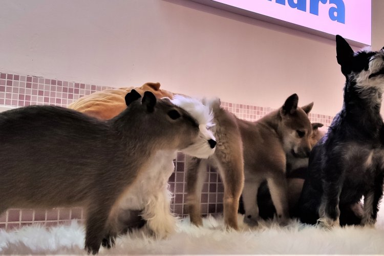R1 Two More Sanlitun Pet Cafe's Cash in on Our Desire to Touch Animals