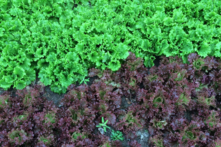 Nine Reasons to Go Organic While Living in China