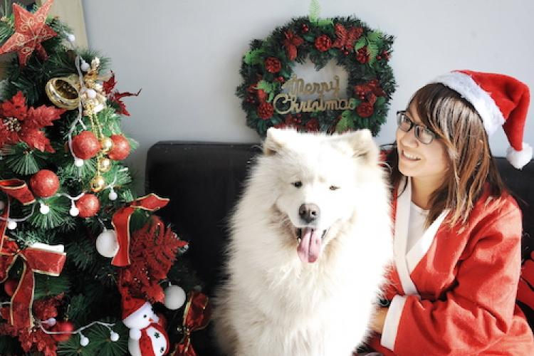 A Cuddles Christmas: How These Fine Furry Guests Spend the Holidays