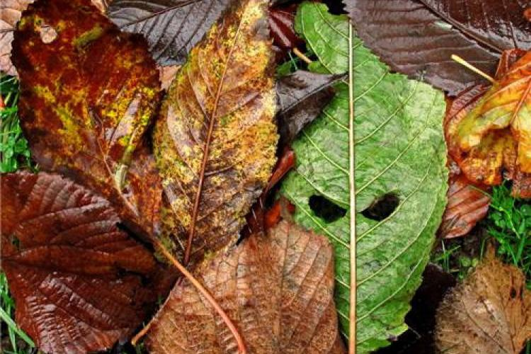 News You Might Have Missed: Leaf Knocks Out Girl, Storm Discoveries and a Call for Photos