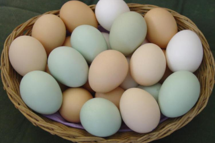 News You Might Have Missed: The Price of Eggs and School Scandals