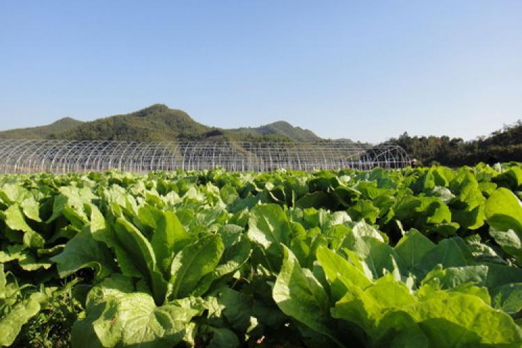 100 free dating sites worldwide organic farming
