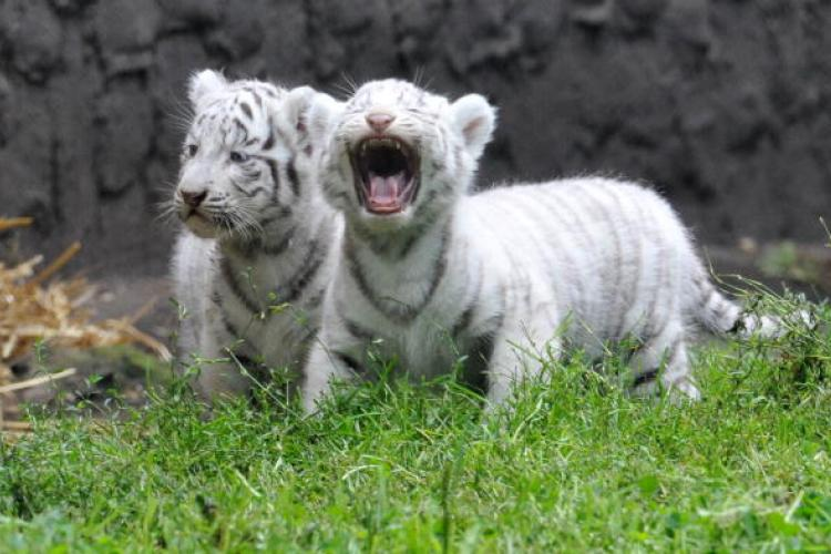 News You Might Have Missed: Tigers, Pandas, PM2.5 and Pests