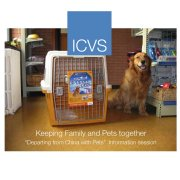 Taking pets overseas is clear and smooth with the help of the pet relocation experts at ICVS!