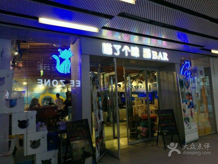 Beijing Cat Cafes