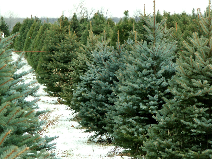 Yes, You Can Buy Real Christmas Trees (and Santa Outfits) on ...
