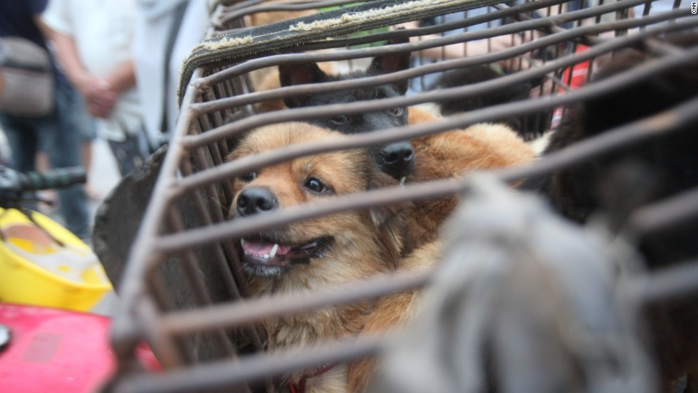 Dog Meat Culture vs. Modern Society in China