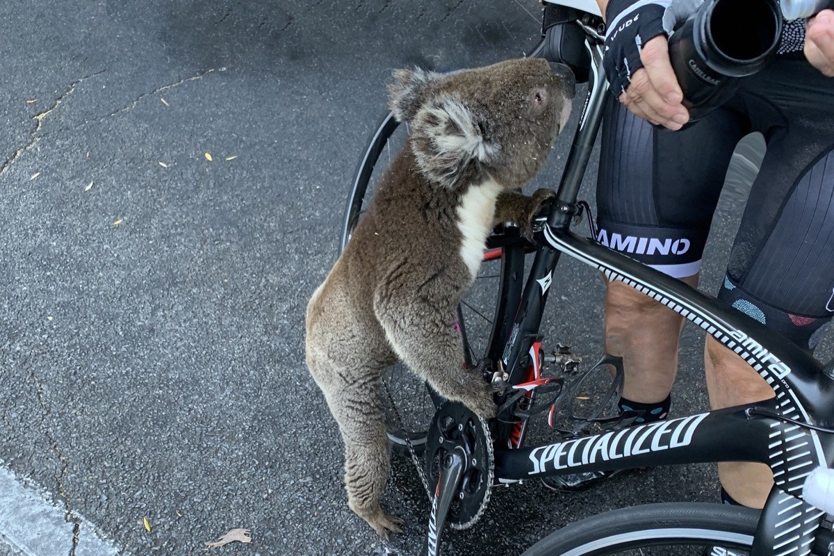DP Holiday Huffing: Cycle 400k this Chinese New Year in Support of Australian Animal Life